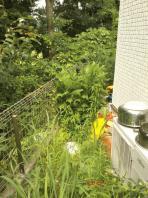 7月23日。鶴が丘 内海様宅での草刈り作業です。